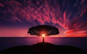 עץ עם שמש ומים ואדמה 5 האלמנטים