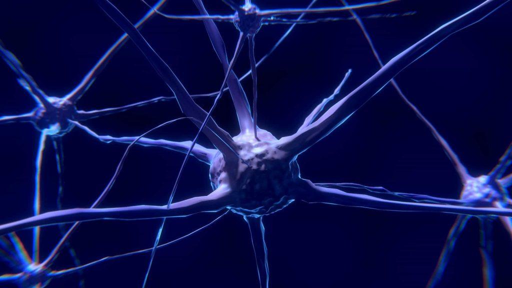 סינפסות תא עצב בתיאוריה האינטואיטיבית של ג'יימס ולאנגה