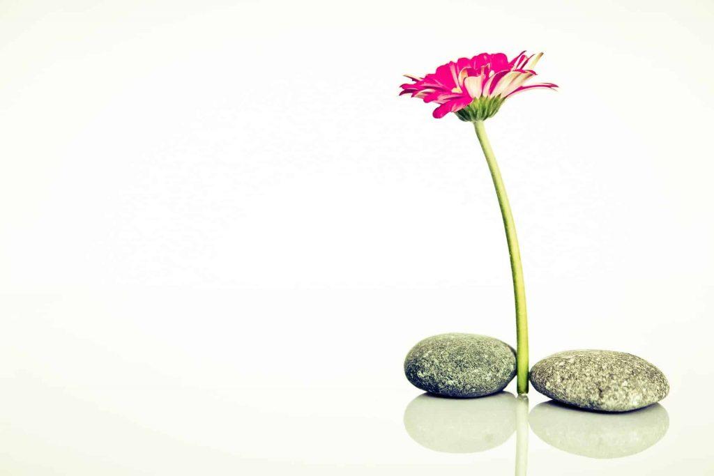 איזון והרמוניה בשמירה על הנפש